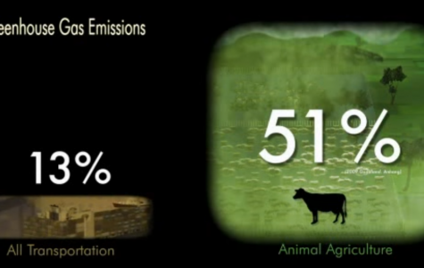 The Consequences of Animal Agriculture