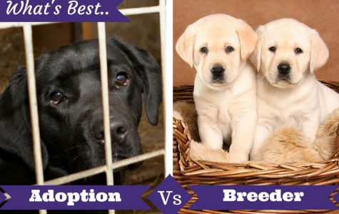 Adopting Pets: Shelters vs. Breeders